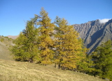 region forest